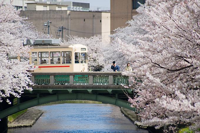 富山市 – 桜、満開