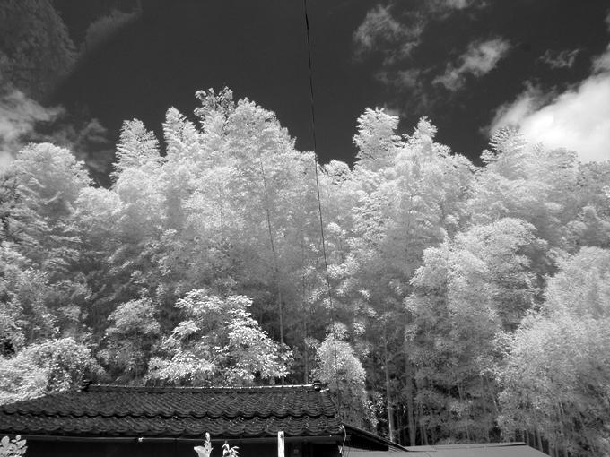 竹林、現実にはない風景
